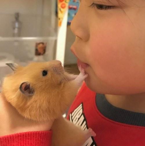 宠物动物 宠物 2017年03月8日 17:22  虽然兄妹都很爱吃,但是mugi身为