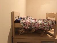打雷我怕怕!小傻貓決定睡床底 還想拉被被進去蓋(圖/網友Donna Lee授權提供)