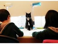 黑貓安親班。(圖/網友Rita Lin提供,請勿隨意翻拍,以免侵權。)