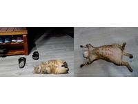 ▲門口出現肥美「貓蛹」。(圖/希默&雙啦的雜物間授權提供。)