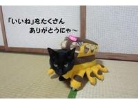 ▲什麼!這不是傳說中的「龍貓公車」嗎?(圖/翻攝自推特帳號:kigurumicyokor1,下同。)