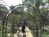 ▲苗栗三義雅聞香草植物工廠。(圖/IG@sueshu2160提供,請勿任意轉載)