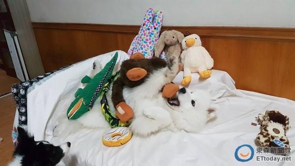 小羊脸上总是挂著甜甜的笑容,跟爸爸妈妈逛宠物展有吃又有玩更是开心