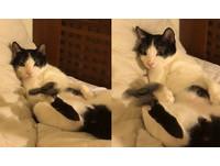 ▲貓界陀螺手。(圖/網友黃少白提供,請勿隨意翻拍,以免侵權。)