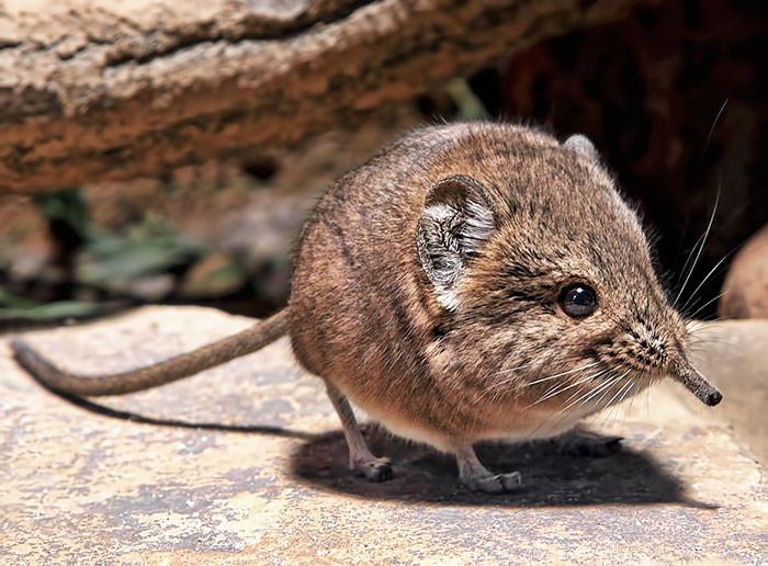 10种全世界最圆的动物!鼻血要被这些可爱毛球榨乾啦
