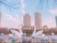 ▲首爾Sweet Swans天鵝家族特展。(圖/取自韓國觀光公社 - VisitKorea粉絲專頁)