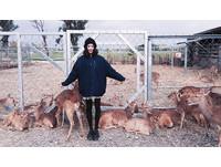 鹿境 梅花鹿生態園區(圖/網友fangchenliou提供,請勿隨意翻拍,以免侵權。)