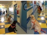 義大利搜救犬拜訪兒童醫院。(圖/翻攝自SICS - Squadra Italiana Cani Salvataggio - Scuola Italiana Cani Salvataggio)