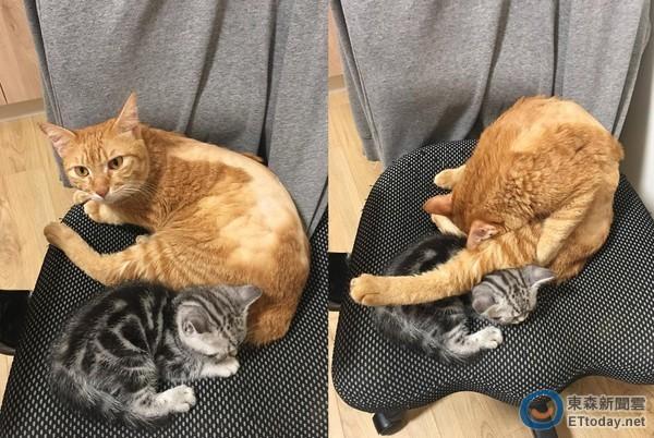 小猫瞬间傻掉的表情也让网友觉得好可爱,「小猫咪整个傻眼欸!」