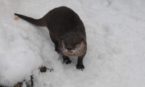 朗利特野生动物园区指出,园区内大部分的动物都窝在暖和的室内,但有