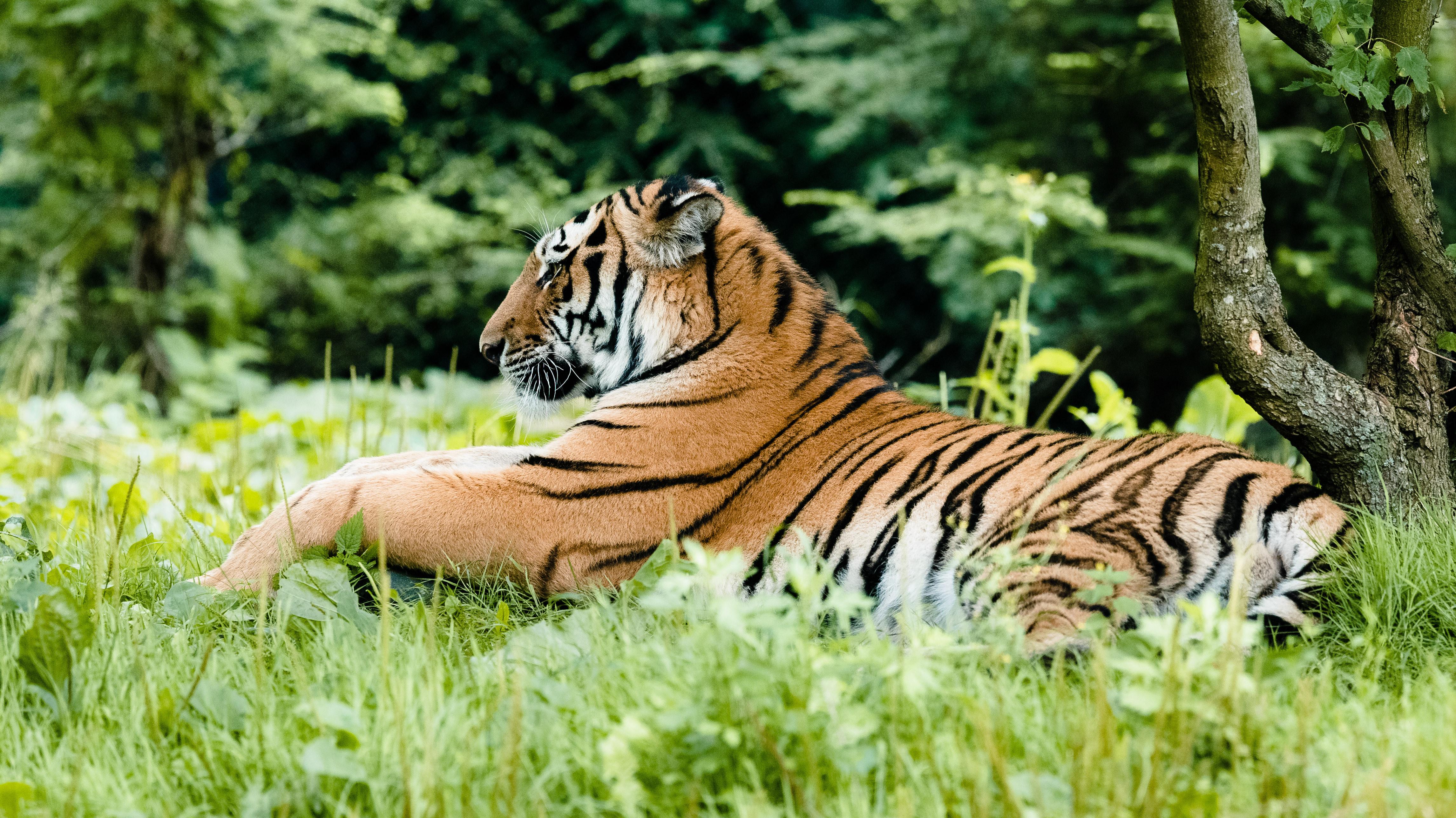 饲主弃养毛小孩!害流浪宠物安乐死 动物园:不如捐给老虎吃掉