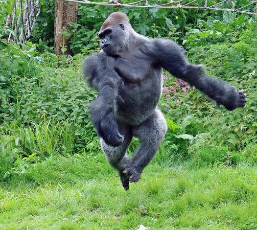 新奇 新奇  国际中心/综合报导 英国佩恩顿动物园 (paignton zoo)的15