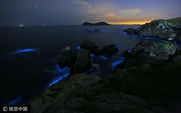 萤光海的远处有点点渔火 浙江「蓝眼泪」美照疯传陆网