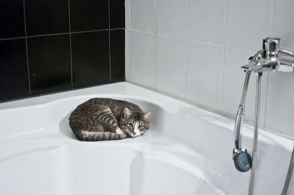 给猫咪用洗毛精洗澡时,要像帮小朋友洗澡一样细心,不可以将水溅到