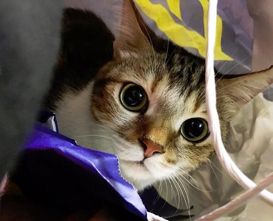 ▲一起窺網紅 肚臍是隻貓。(圖/小冰提供)
