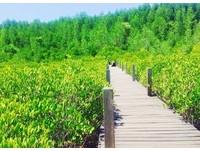 泰國羅永府黃金水鼻仔,黃金紅樹林 。(圖/翻攝自IG@nesparichat)
