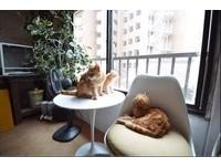 動物咖啡廳(圖/翻攝自twitter)