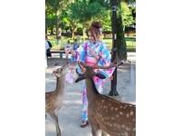 ▲安苡愛到奈良旅遊體驗餵鹿。(圖/安苡愛提供)