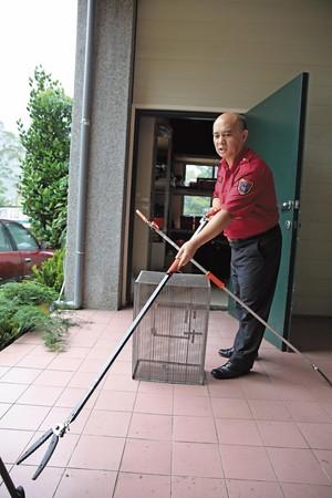苗栗消防局象鼻分隊曾在住戶家中一次發現6條眼鏡蛇,連見過大風大浪的消防員都不免腿軟。