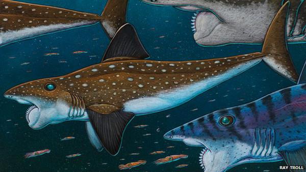 古代「旋齿鲨」牙齿像圆锯 在嘴里转动撕裂食物