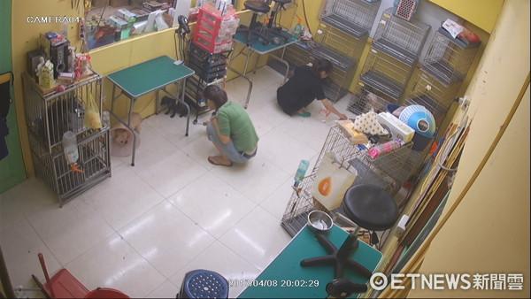 ▲美容師把狗打到流血稱管教。(圖/新北市動保處提供)