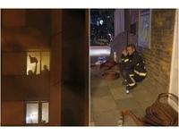 ▲▼倫敦大樓大火受困者太多,消防員救不了崩潰。(組合圖/CFP)