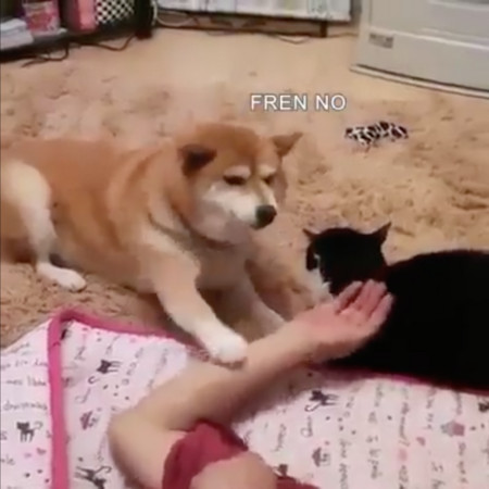 ▲吃醋柴柴(圖/翻攝自粉絲專頁Doge Emojis)