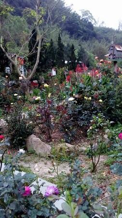 玫瑰山谷(圖/翻攝自Rose Valley 玫瑰山谷粉絲團)