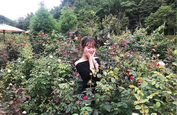 玫瑰山谷(圖/網友zuu.1997提供,請勿隨意翻拍,以免侵權。)