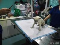 貴州貴陽虐狗,流浪狗被20多枚魚鉤刺全身。(圖/翻攝自人民網)