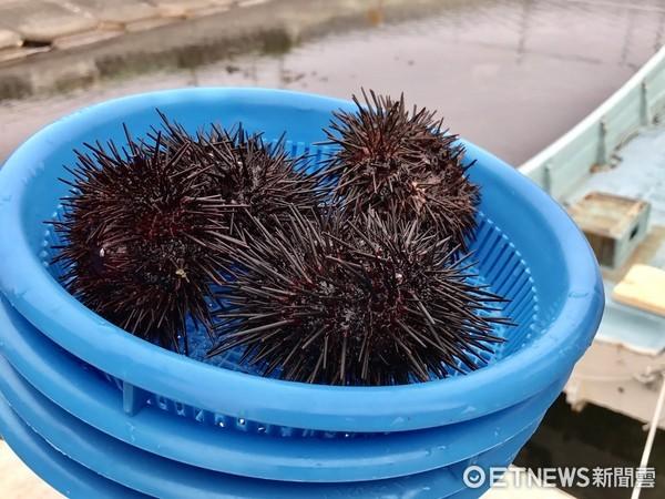 剖开海胆现吃,手打荞麦面 深游北海道4大推荐体验活动