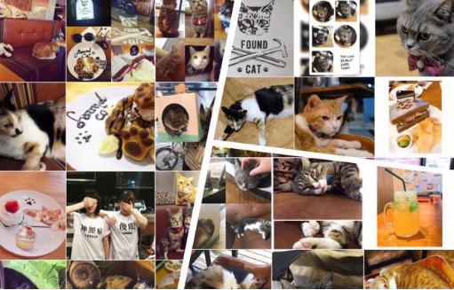 找 貓咪 Found Cat ️ cafe &bar(圖/翻攝自找 貓咪 FoundCatcafe&bar粉絲團)