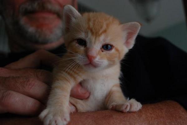 和非常爱跟人们『聊天』,另外,感谢猫咪救援中心给这些『小恶魔』们第