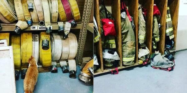 ▲▼ 收留我!橘貓應徵當消防員 每天巡邏完立刻「強迫抱抱」。(圖/翻攝自Instagram:@flamethearsoncat)