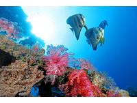 ▲▼總統府南海科技成就研討會,太平島水下照片(圖/中央研究院鄭明修博士提供)