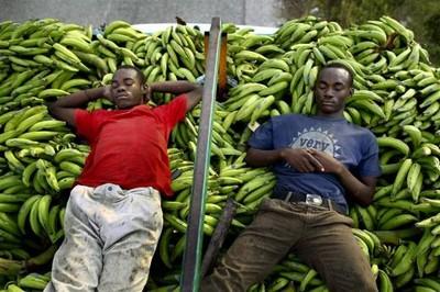 澳洲「超级香蕉」可救75万非洲人