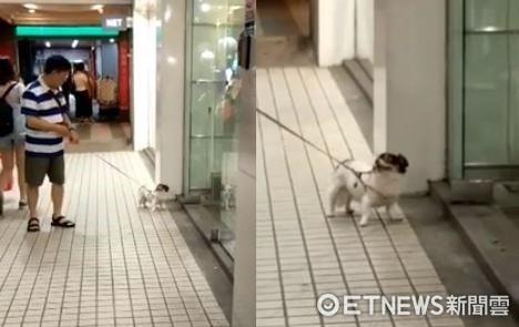 ▲冷氣好涼喔!狗狗經過店面就「黏死死」 爸傻眼拉不動。(圖/網友Mei Hua Chen提供)