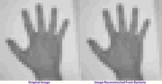 攝影家邁布里奇拍攝的手掌原圖(左),從DNA儲存訊息還原的圖像(右)。(Seth Shipman)