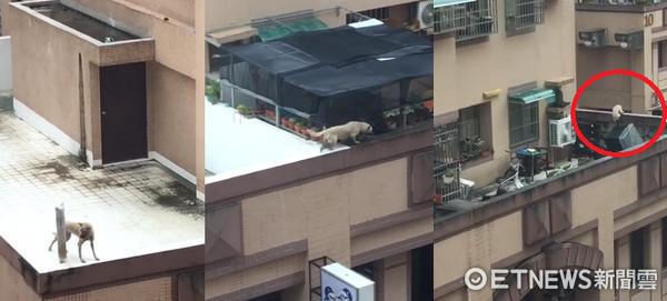 ▲關頂樓1年多...狗狗被雷聲嚇到閃尿 「跳樓」驚慌逃竄。(圖/網友授權提供)