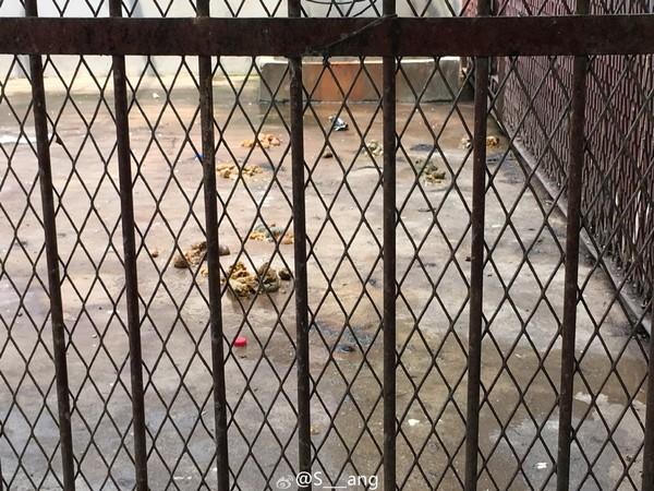 ▼河南许昌西湖公园动物园传出虐待动物,园内的狮子,老虎,熊瘦得