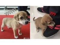 ▲▼安徽省馬鞍市抓到一隻「惡犬」患患。(圖/翻攝馬鞍山當塗公安線上微博)