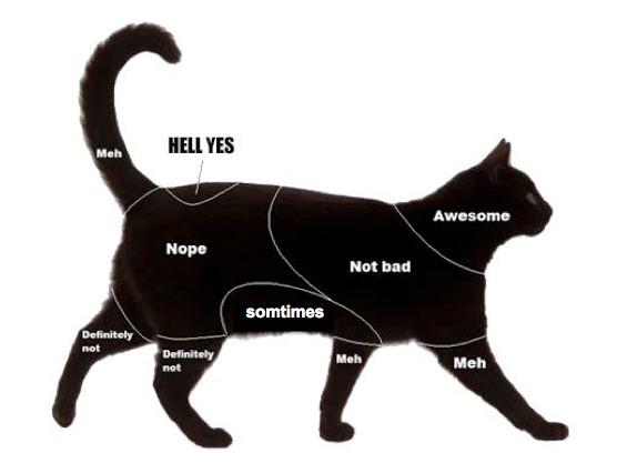 想讓貓咪喜歡你?別忘了這4個原則!(圖/毛起來 MaoUp)