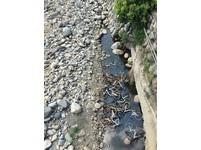 ▲20輛oBike被人丟棄在溪中泡水。(圖/翻攝自阮厝住三芝)