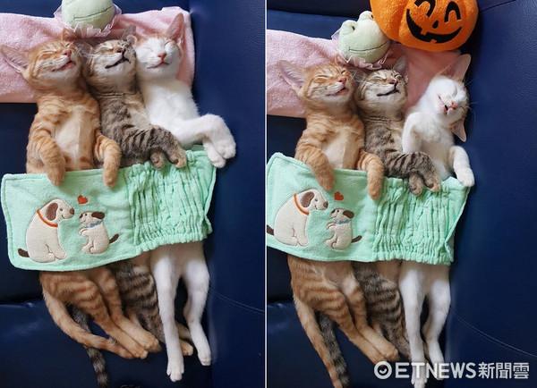 三胞胎睡姿一模一樣。(圖/網友梅毛提供,請勿隨意翻拍,以免侵權。)