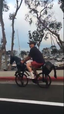 ▲▼國外一名男子騎著改裝「鐵馬」。(圖/翻攝自FB,Viral Thread)