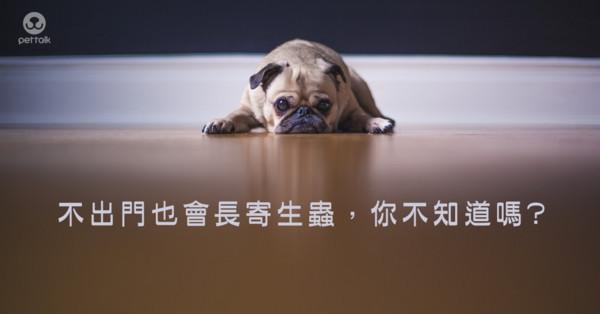 圖/翻攝自PetTalk官網)