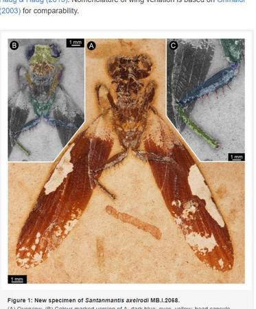 ▲▼巴西東北部發現1.1億年前的螳螂化石。(圖/翻攝自《PeerJ》)