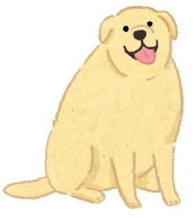 肥胖潛力股?天生易發胖的狗狗品種!(圖/毛起來 MaoUp)