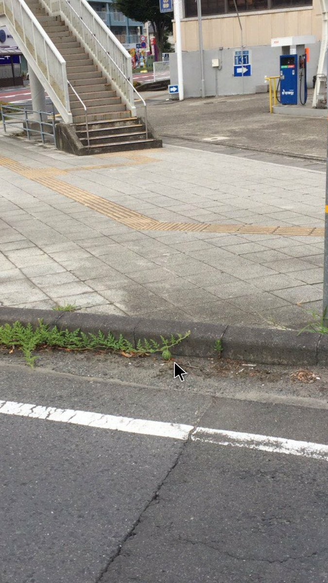 ▲▼日本網友發現路邊有西瓜。(圖/翻攝自推特,DC__8787)