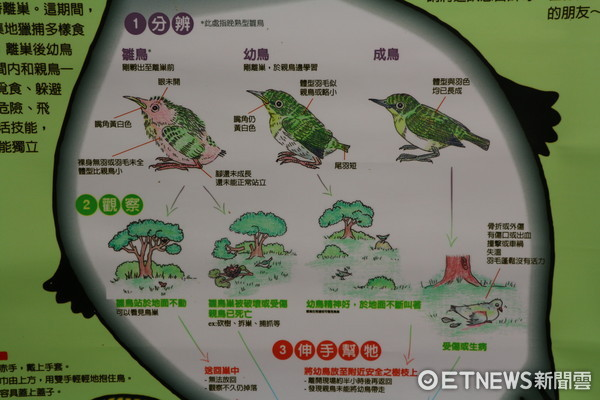 ▲▼台北野鳥救傷中心,雛鳥宣導。(圖/記者戴榕萱攝)。